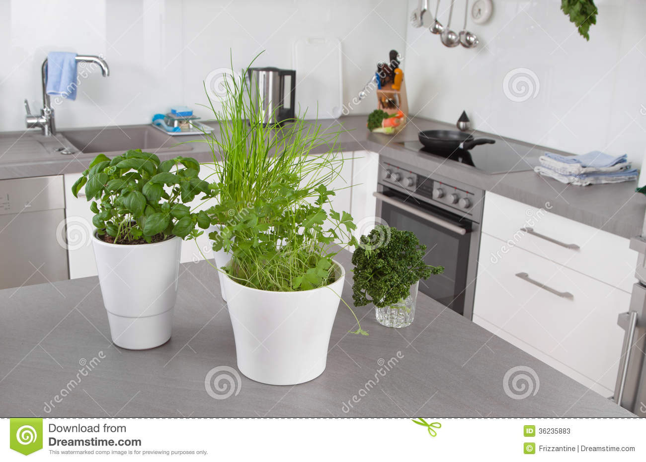 Fresh Herbs In Flower Pots In Kitchen Stock Image - Image of health ...