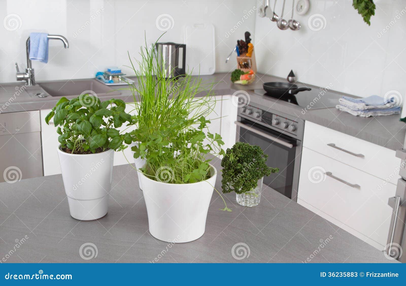 Fresh Herbs In Flower Pots In Kitchen Stock Photos Image