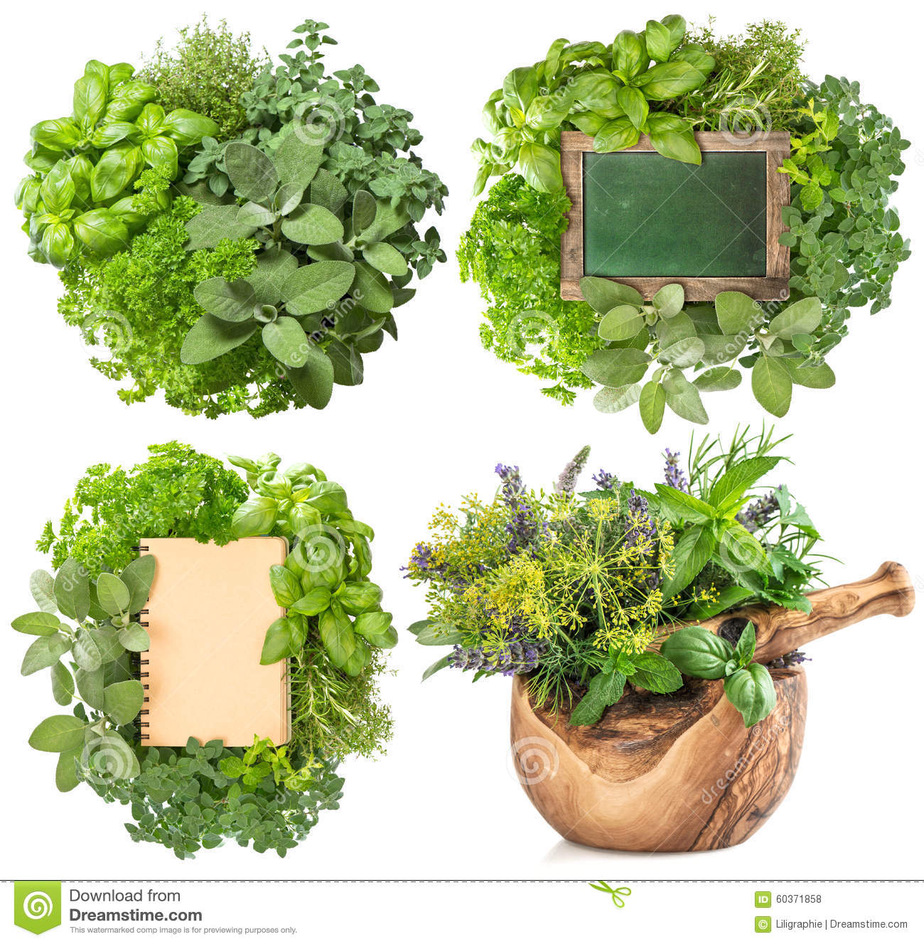 Fresh herbs isolated on white background. Big collection