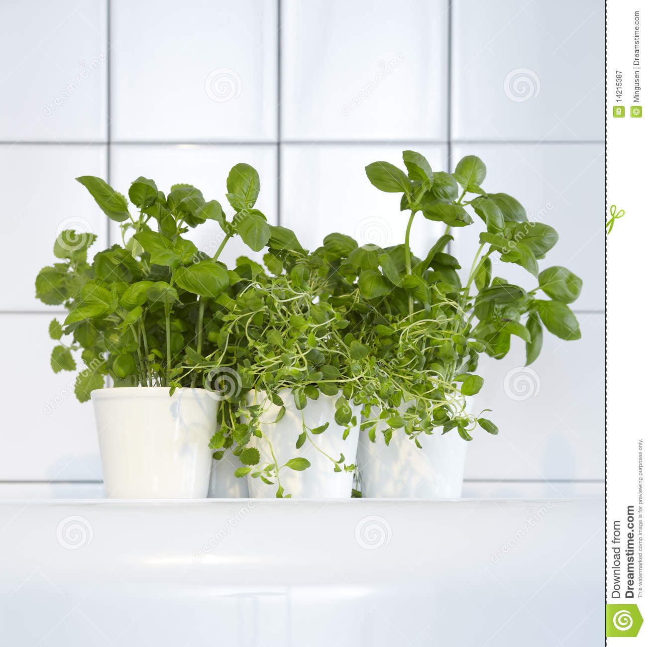Kitchen Herbs: Fresh Herbs In Kitchen Stock Image. Image Of Basil