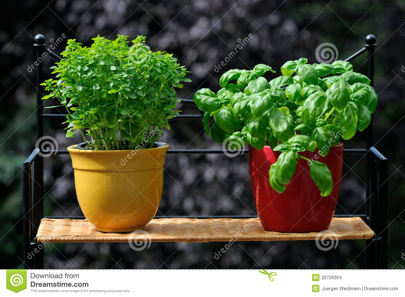 how to grow fresh herbs in pots
