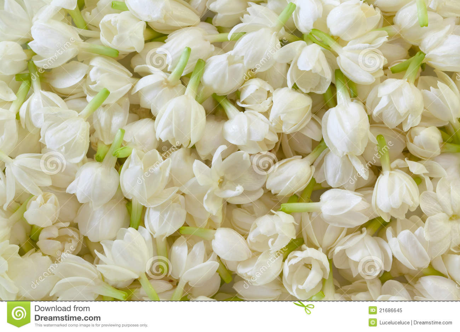 Fresh jasmine flower background stock illustration illustration of fresh jasmine flower background izmirmasajfo Gallery