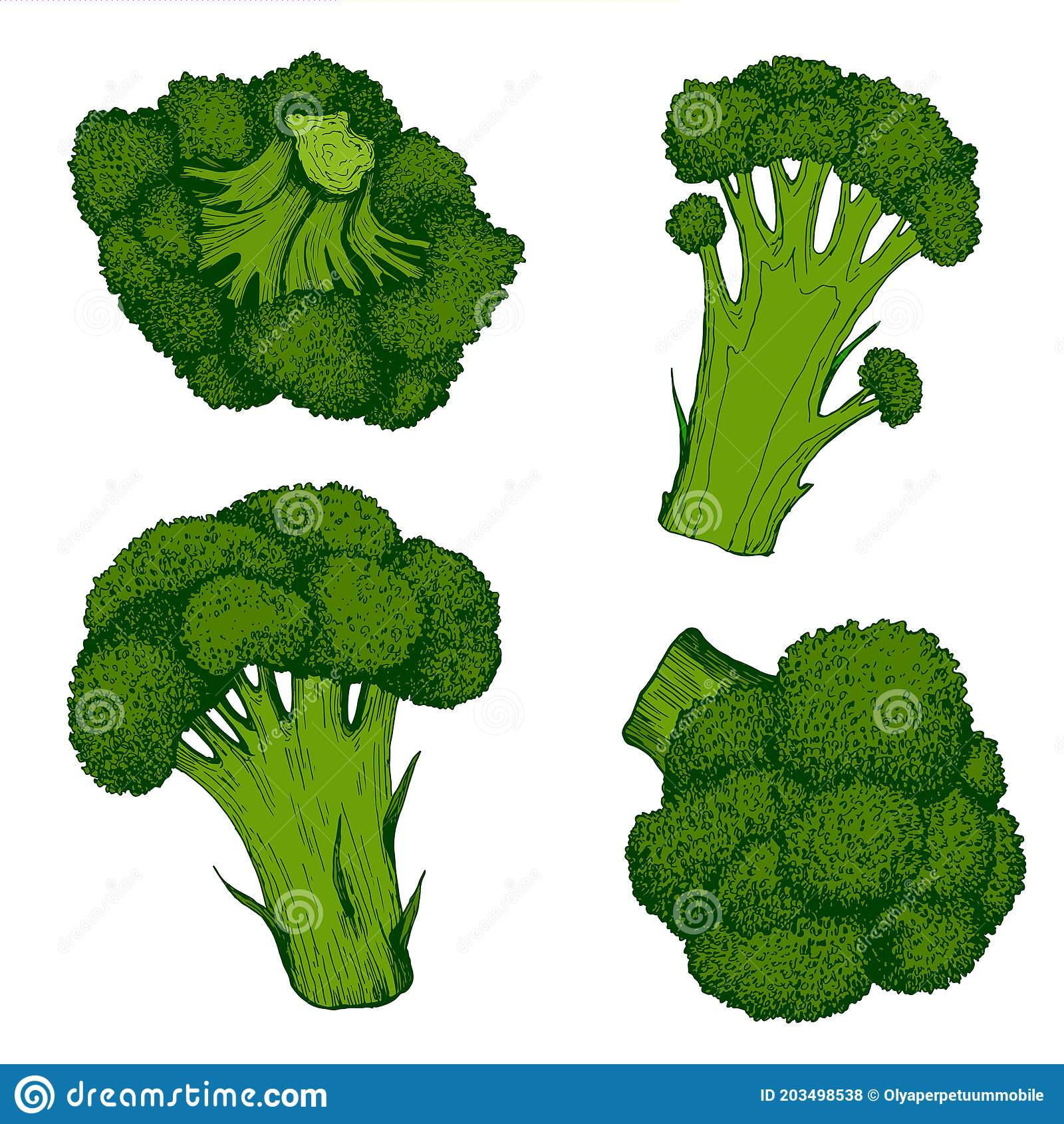 Fresh Juicy Broccoli Colorful Green Vegetable Collection Organic Vegetarian Product Isolated On White Stock Vector Illustration Of Botany Closeup 203498538