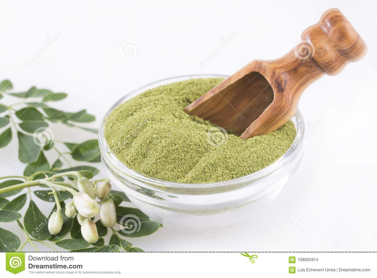 Fresh Leaves And Moringa Powder - Moringa Oleifera Stock