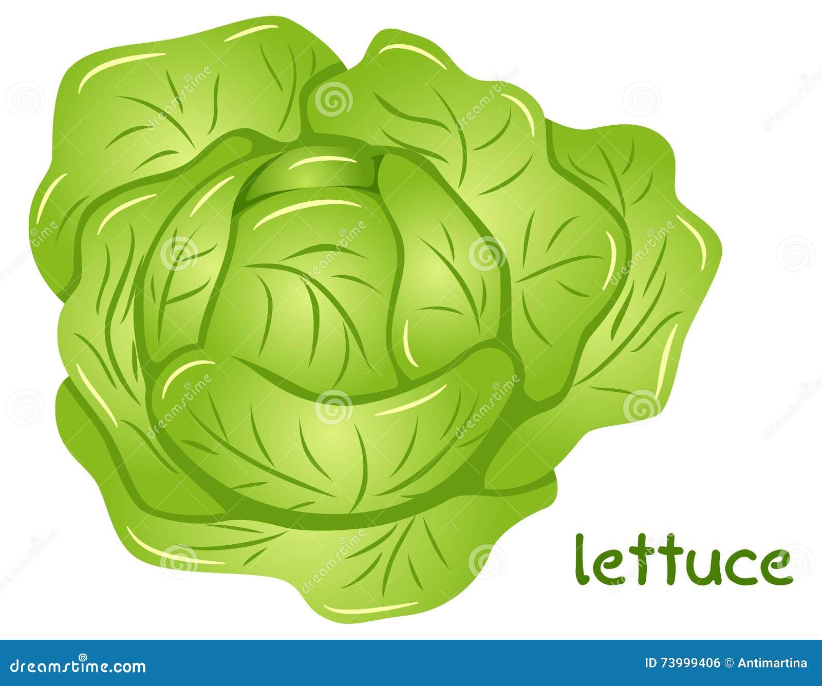 Fresh lettuce head sto...