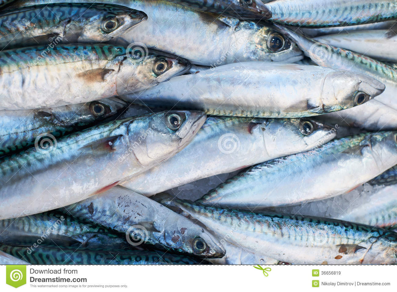 Fresh mackerel fish for sale on market royalty free stock for Stock fish for sale