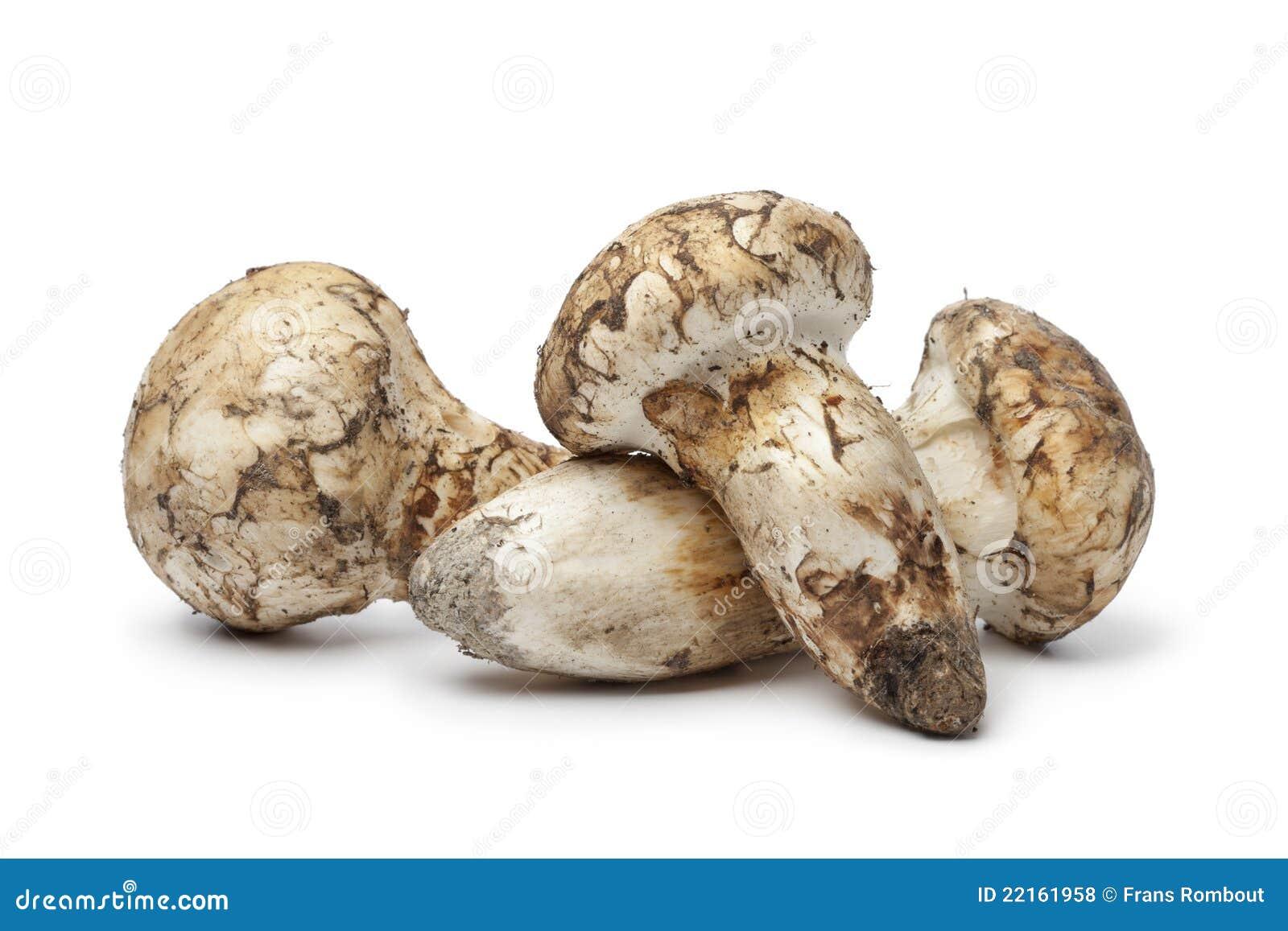 Fresh Matsutake mushrooms