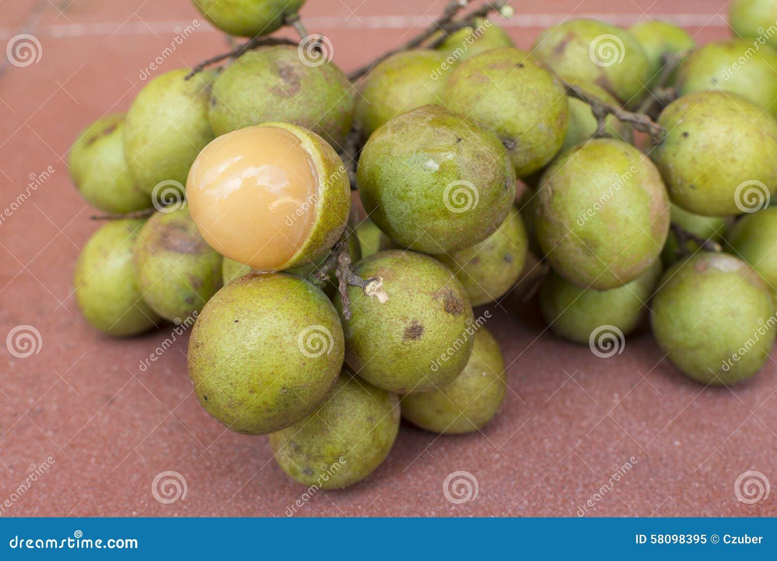 Date fruit in spanish in Brisbane