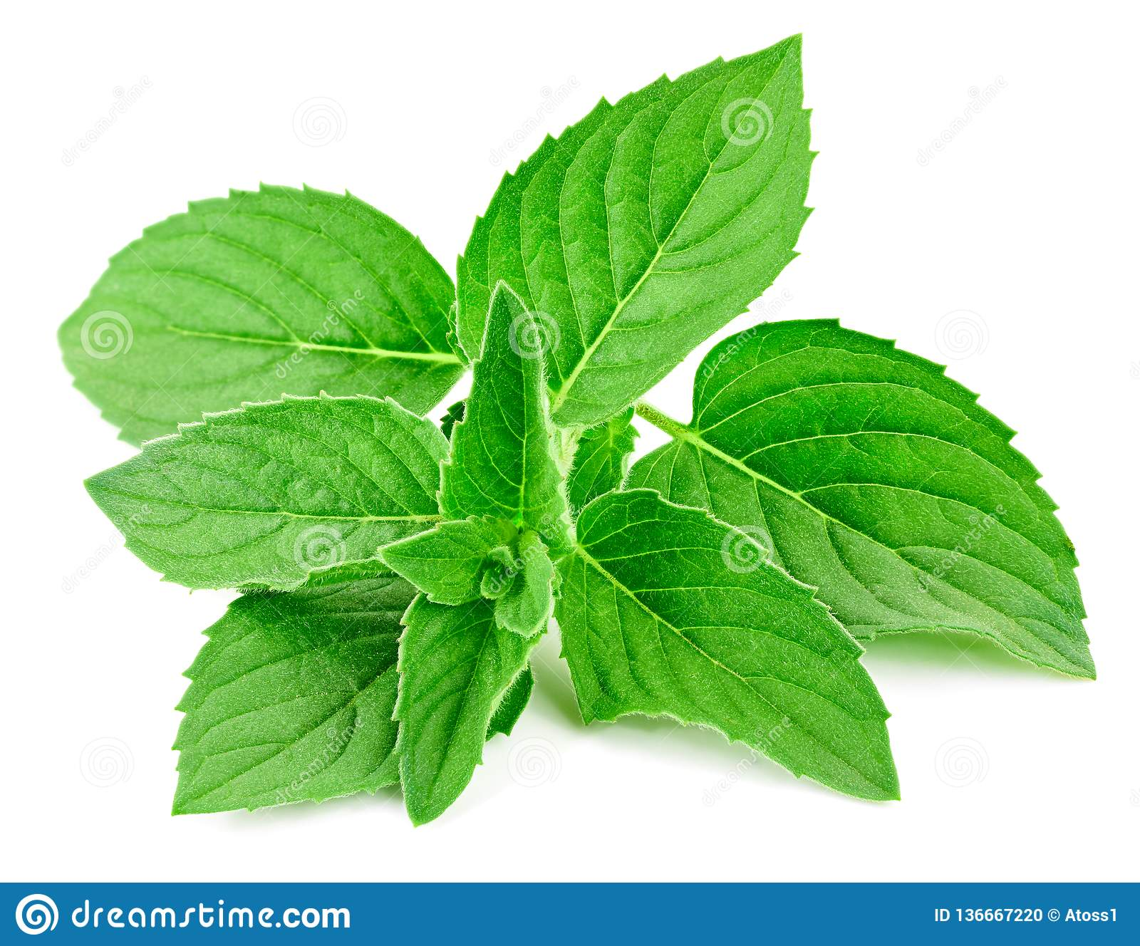 Fresh mint isolated Clipping Path