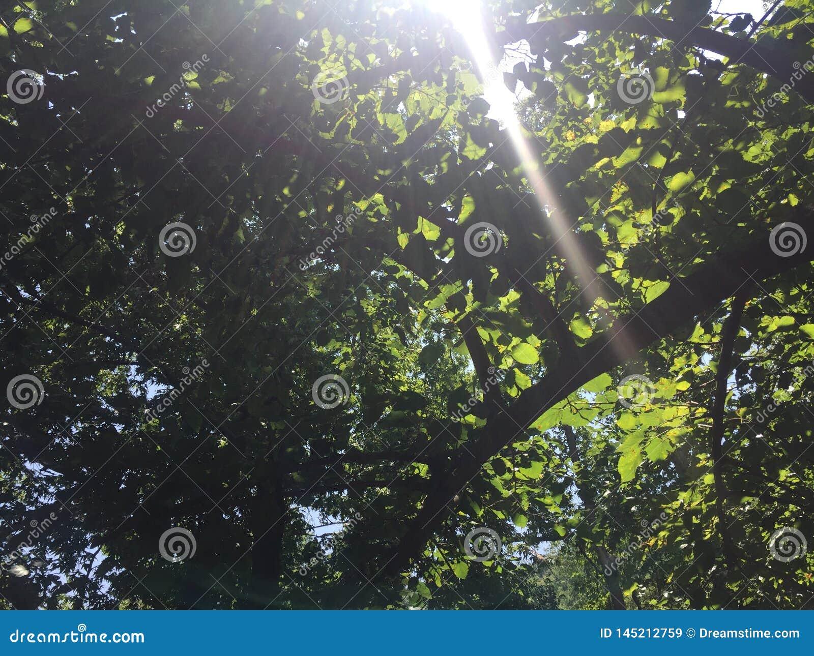 Sun through the leaves