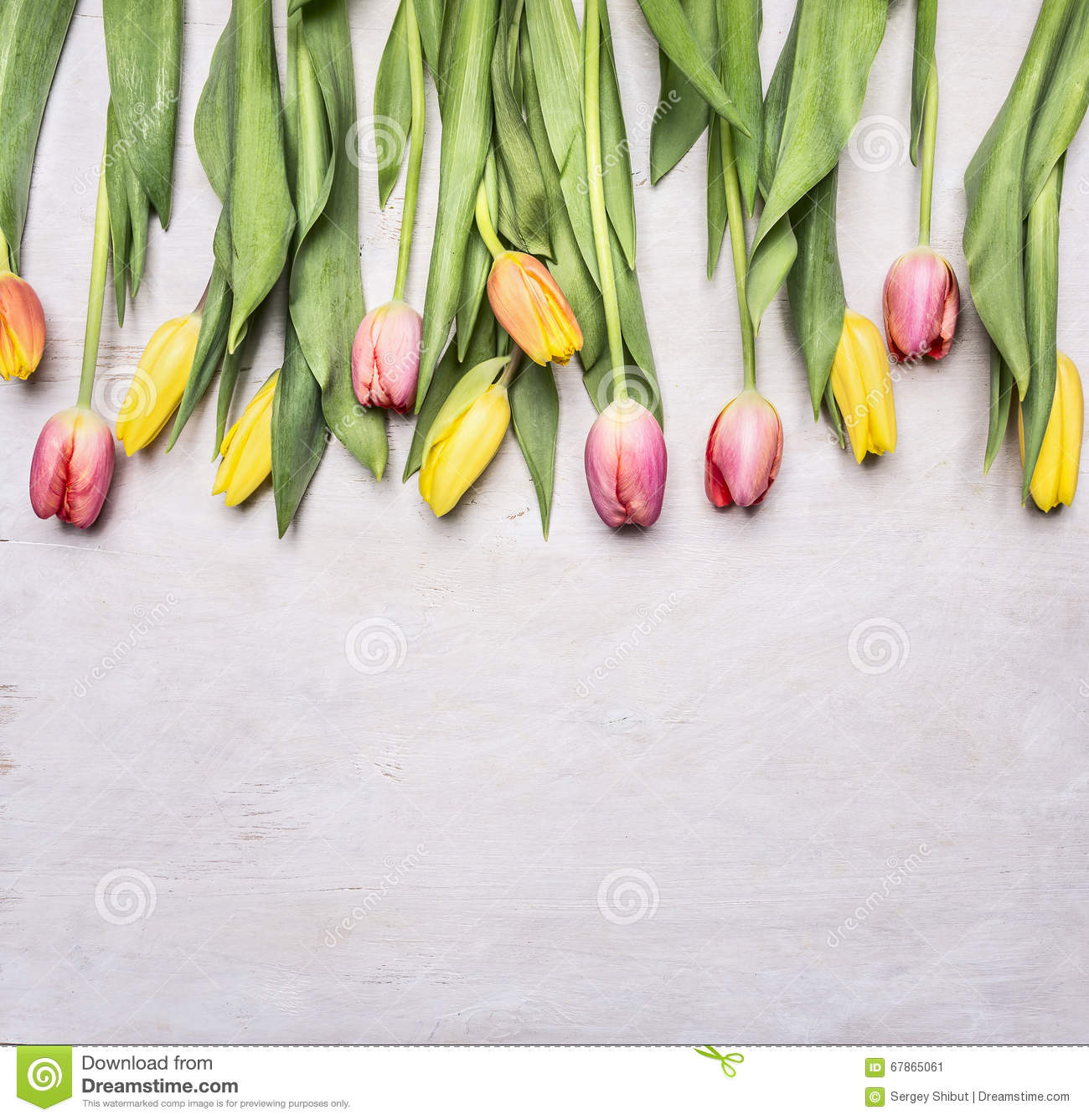 Fresh Multicolored Tulips Spring Flowers Border Place For Text On