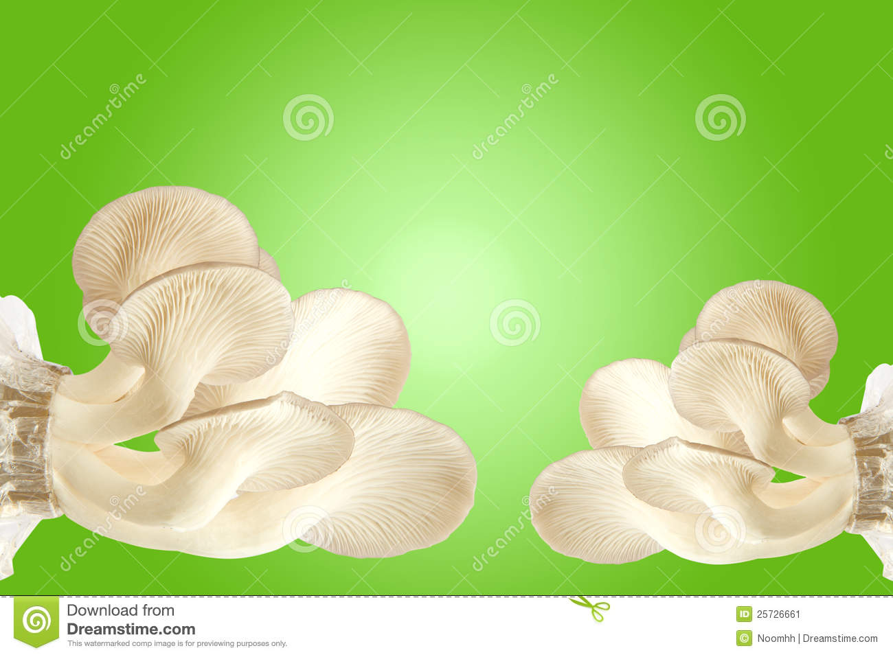 Fresh mushrooms on green