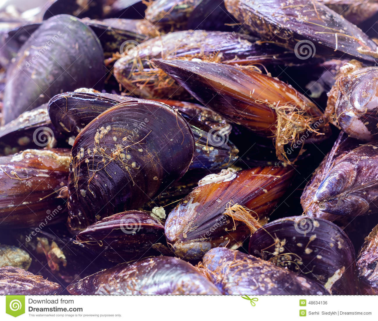 how to keep mussels fresh