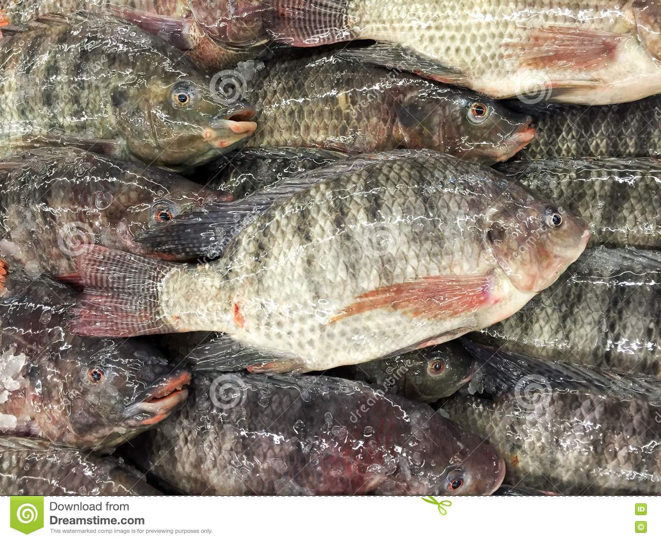 Fresh nile tilapia fish in fish market stock photo image for What type of fish is tilapia