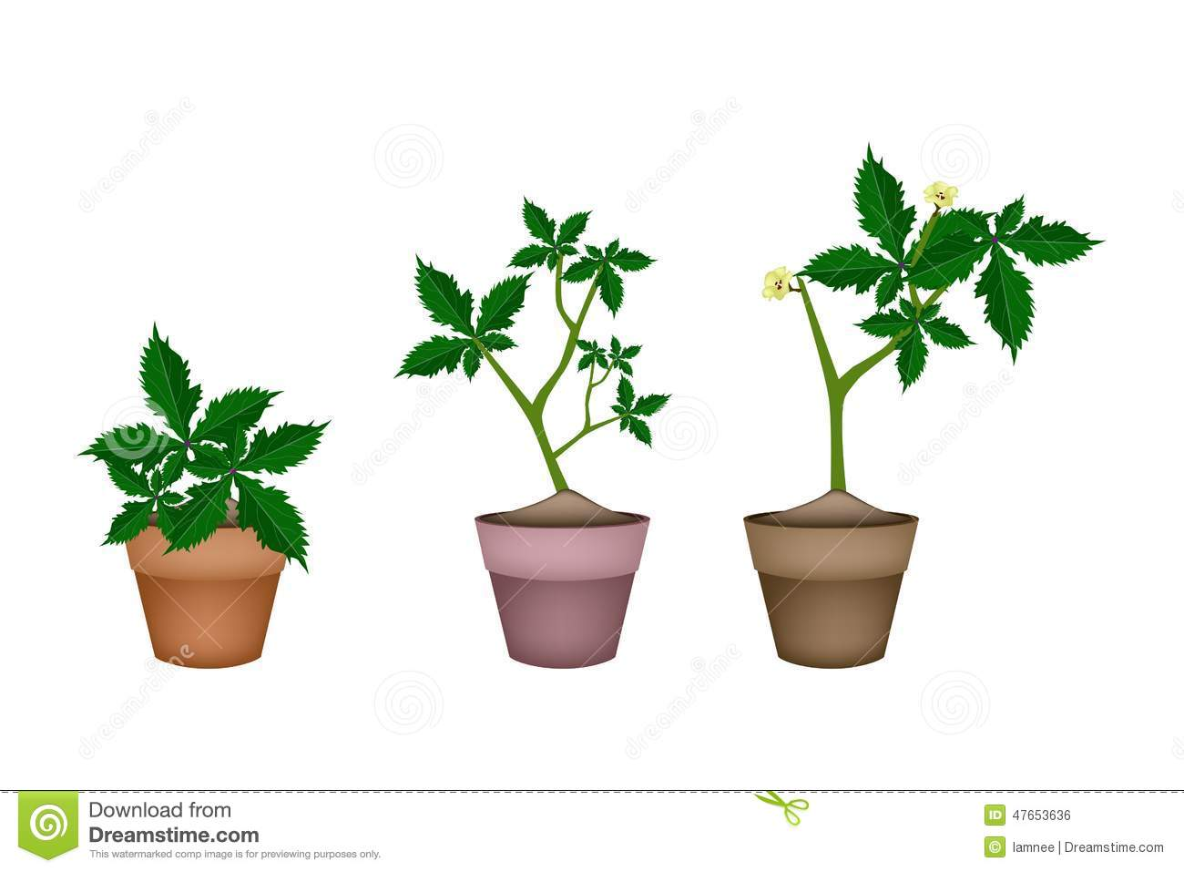 Fresh Okra Plant In Ceramic Flower Pots Stock Vector