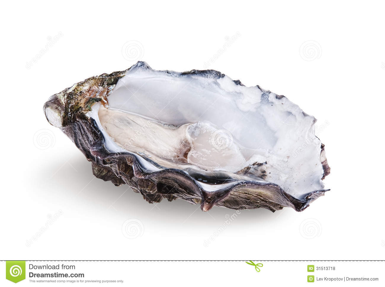 fresh opened oyster royalty free stock photos image