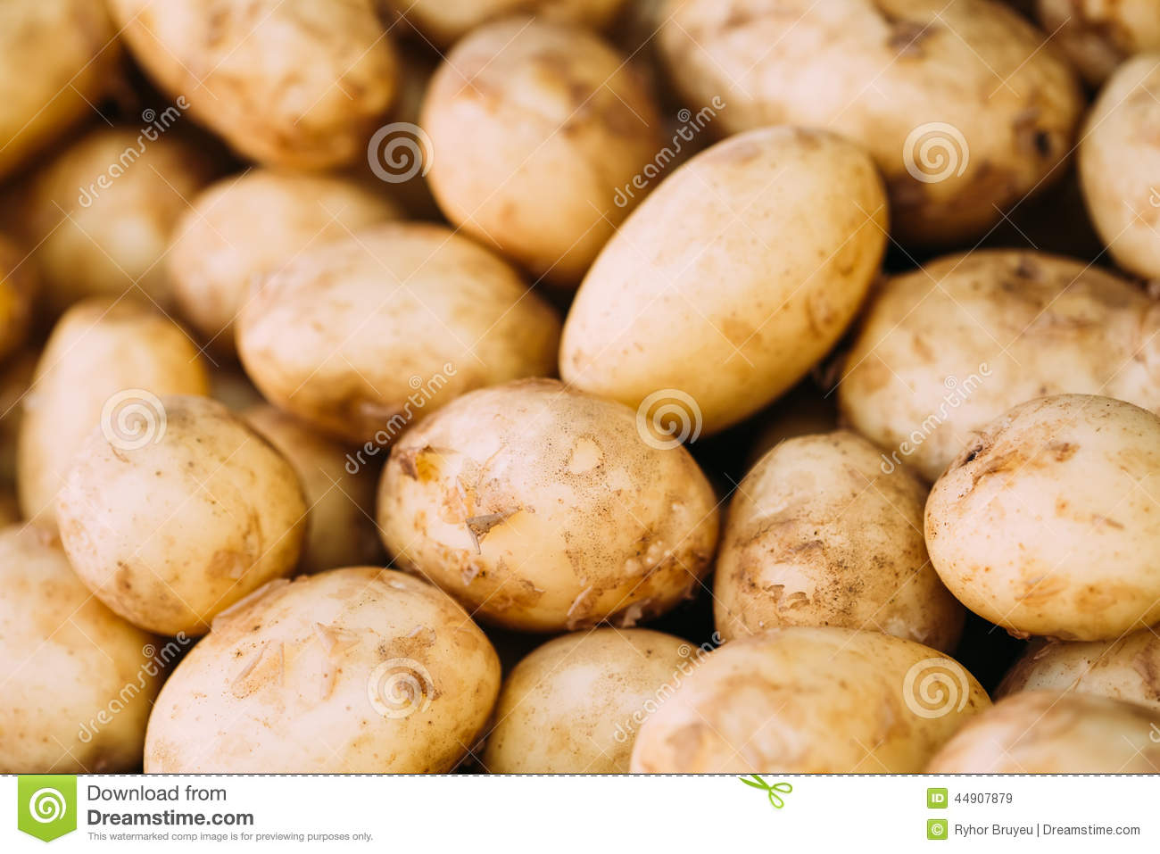 Fresh Organic Young Raw Potatoes For Selling At Vegetable Market