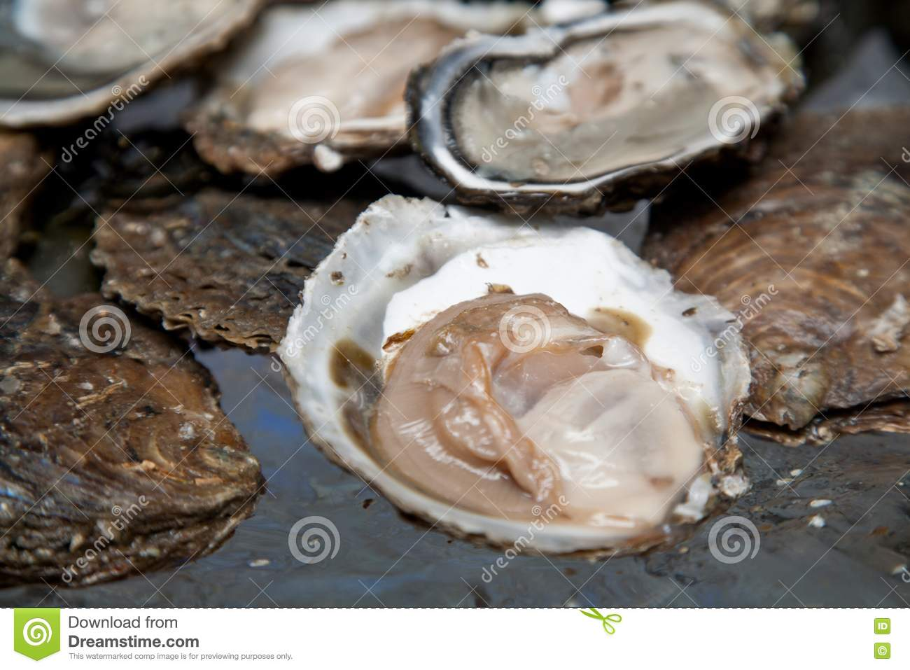 Fresh raw oysters - photo#16
