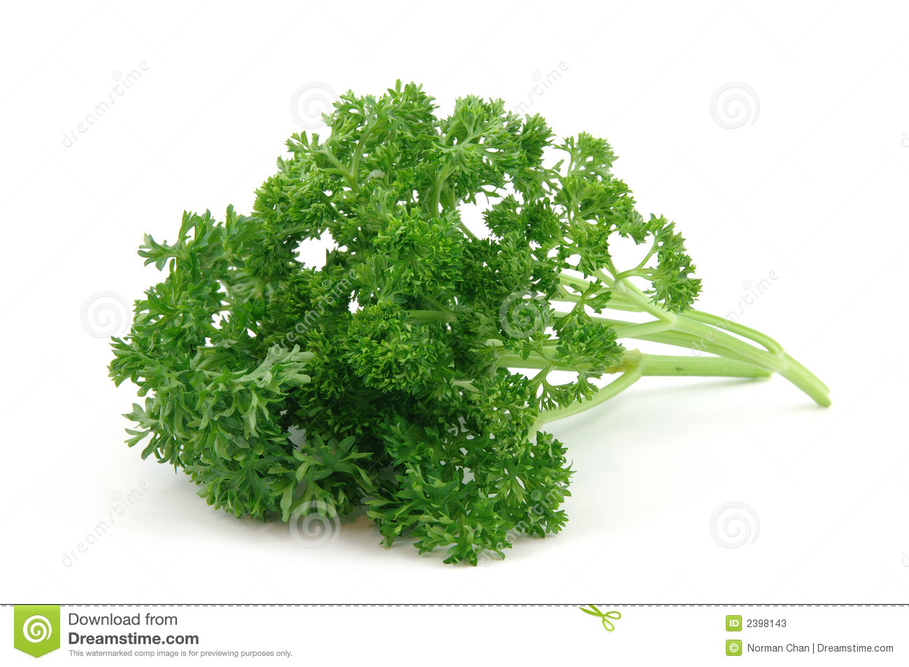 What does dill look like