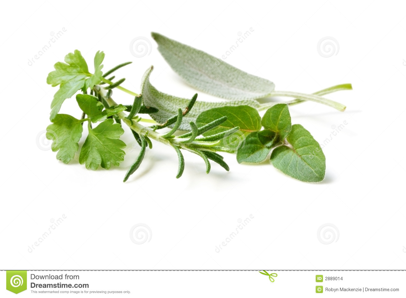 Fresh-picked Herbs
