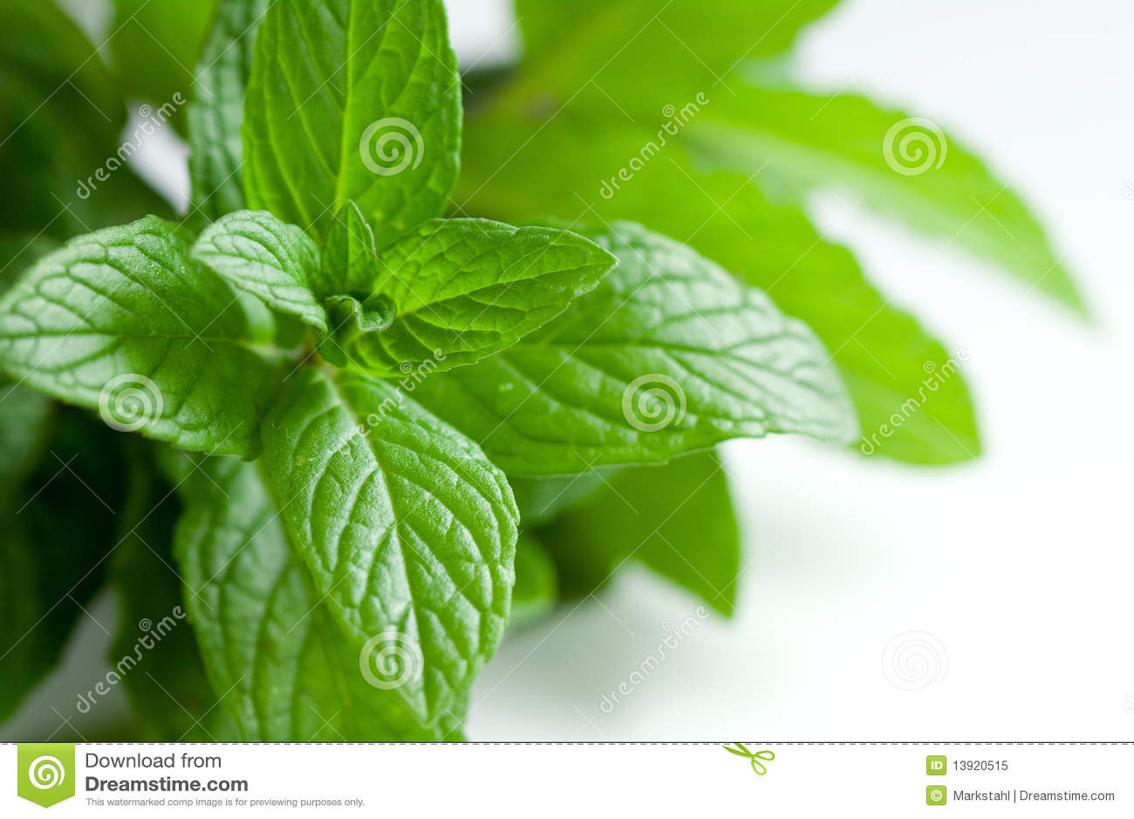 Fresh Picked Herbs on White