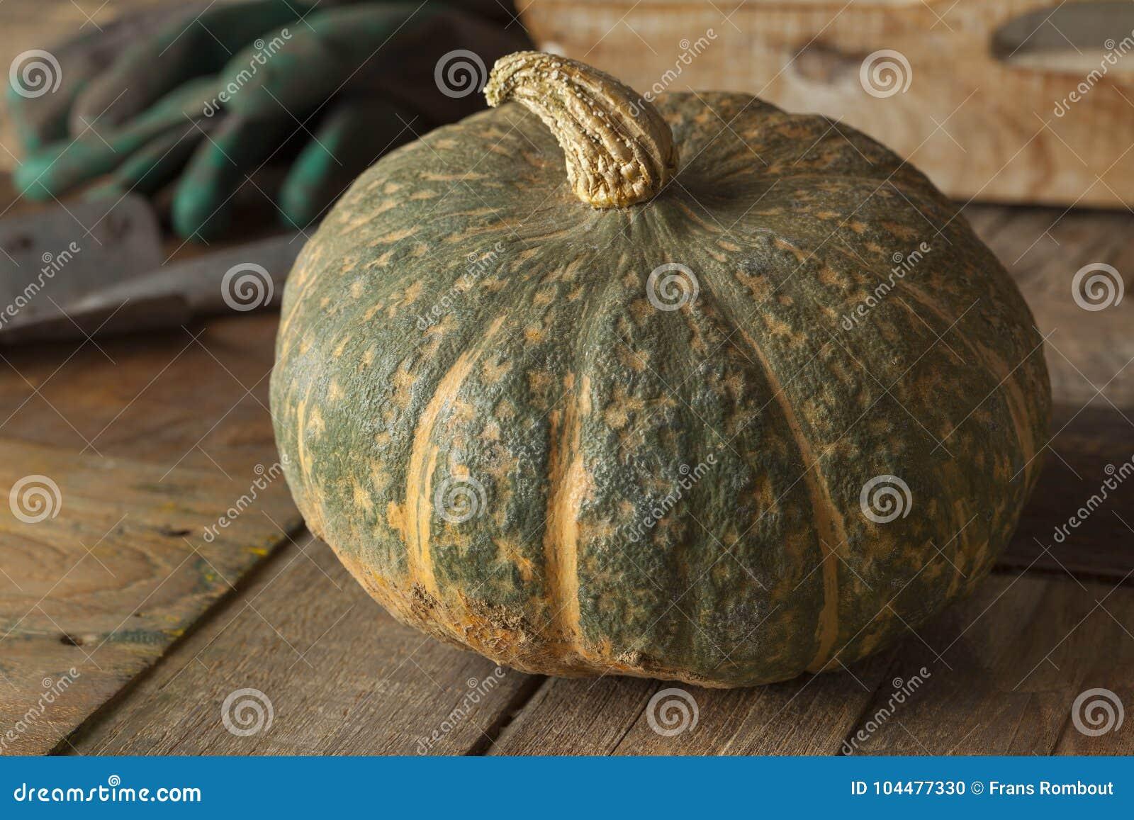 Fresh picked pumpkin Courge Delica Moretti