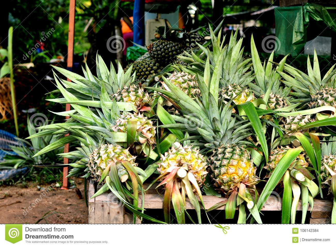 Fresh Pineapples At The Markets