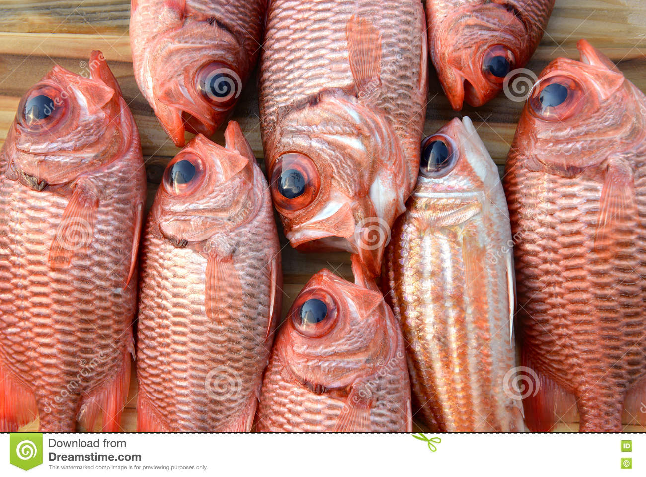 Fresh Pinecone Soldier Fishes For Cooking Stock Photo - Image of ...