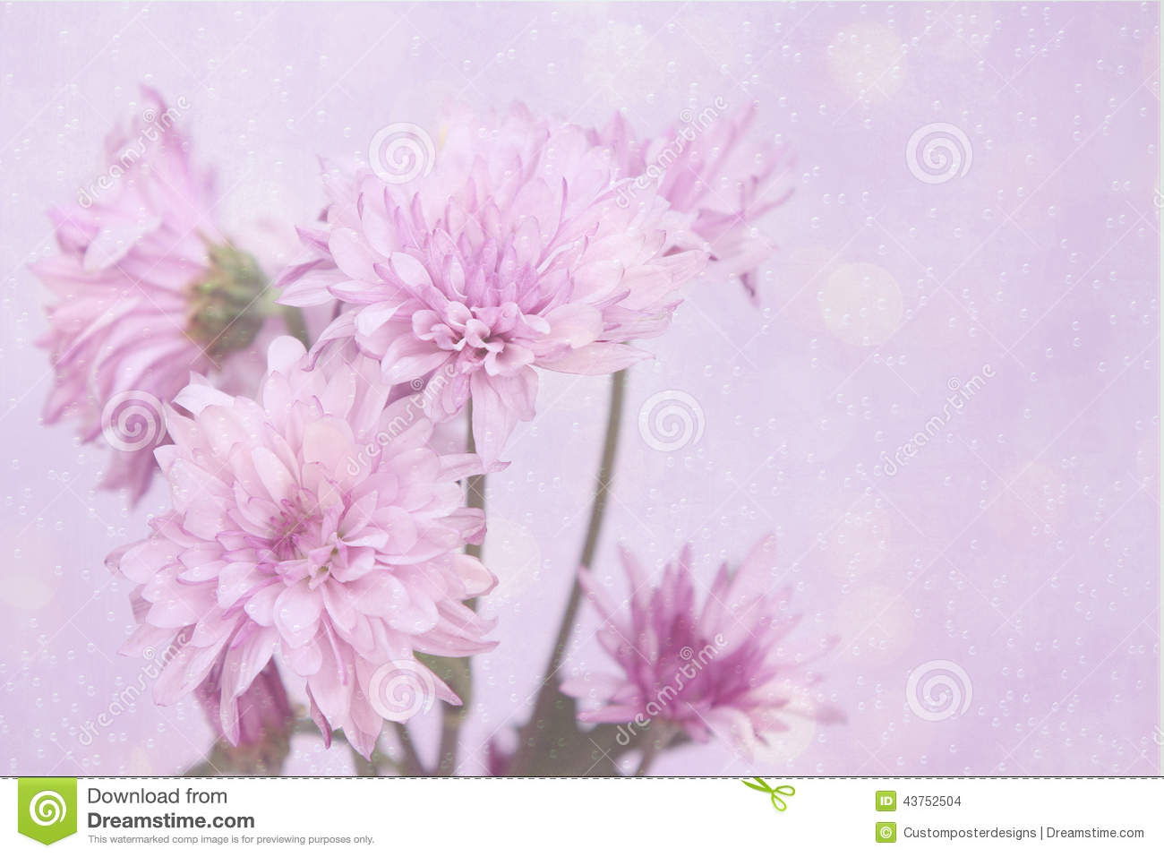Download Fresh Pink Flowers With A Pink Halo And Bubble Background. Stock Photo - Image of botany, floral: 43752504