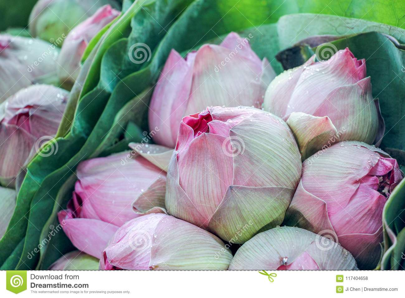 Fresh Pink Lotus Flower Bouquet Stock Photo Image Of Beauty Color