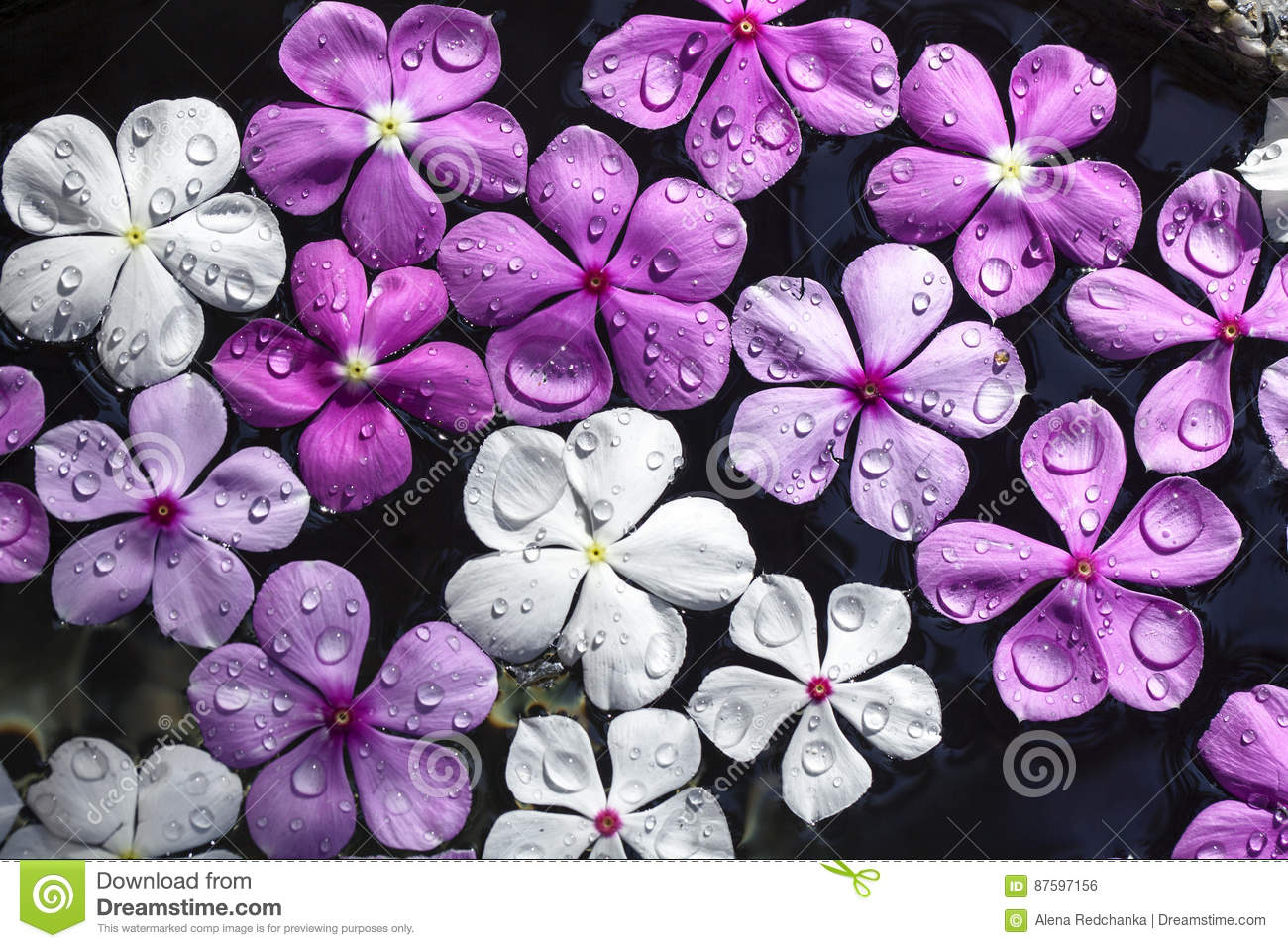 Fresh Pink White And Purple Flowers With Water Drops Stock Photo