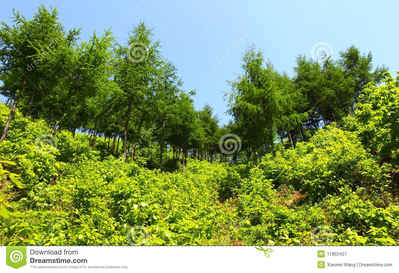 Fresh plants and trees royalty free stock photography for Plants and shrubs