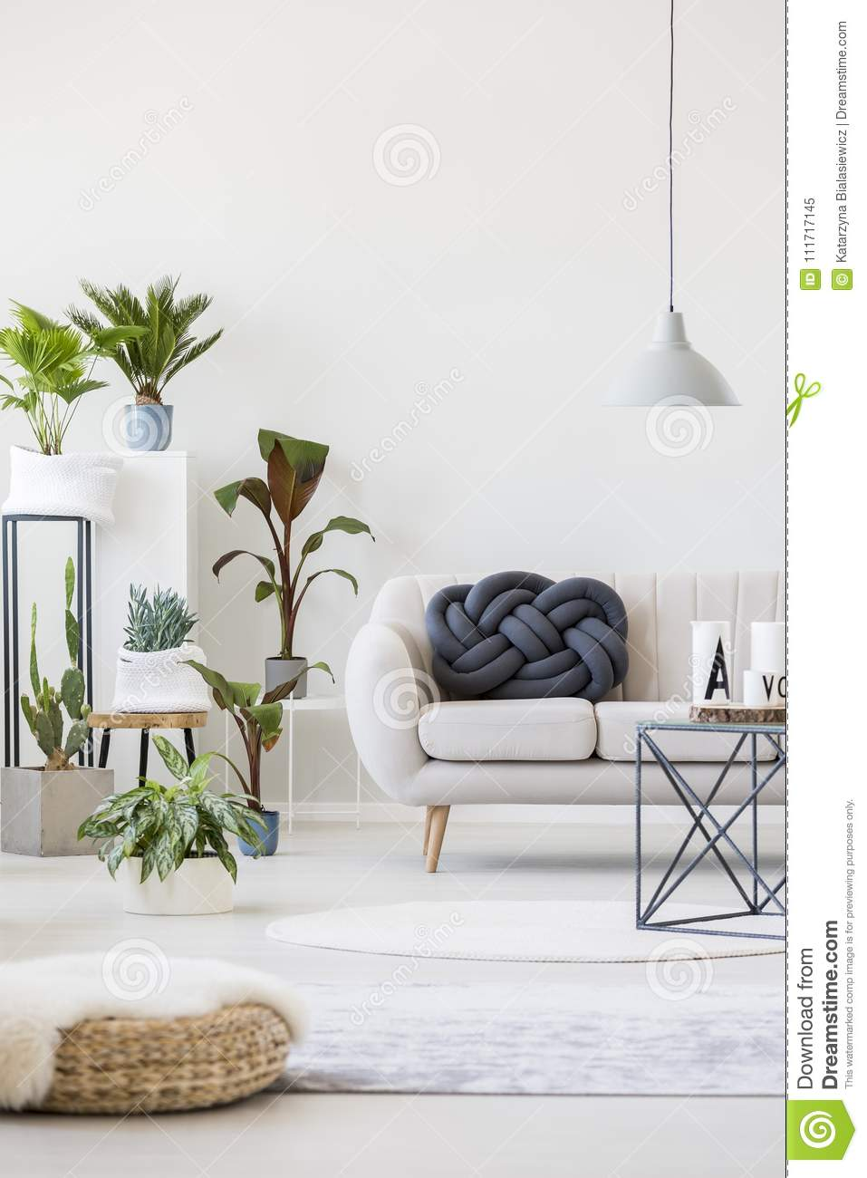 Plants in living room stock image. Image of foreground - 111717145