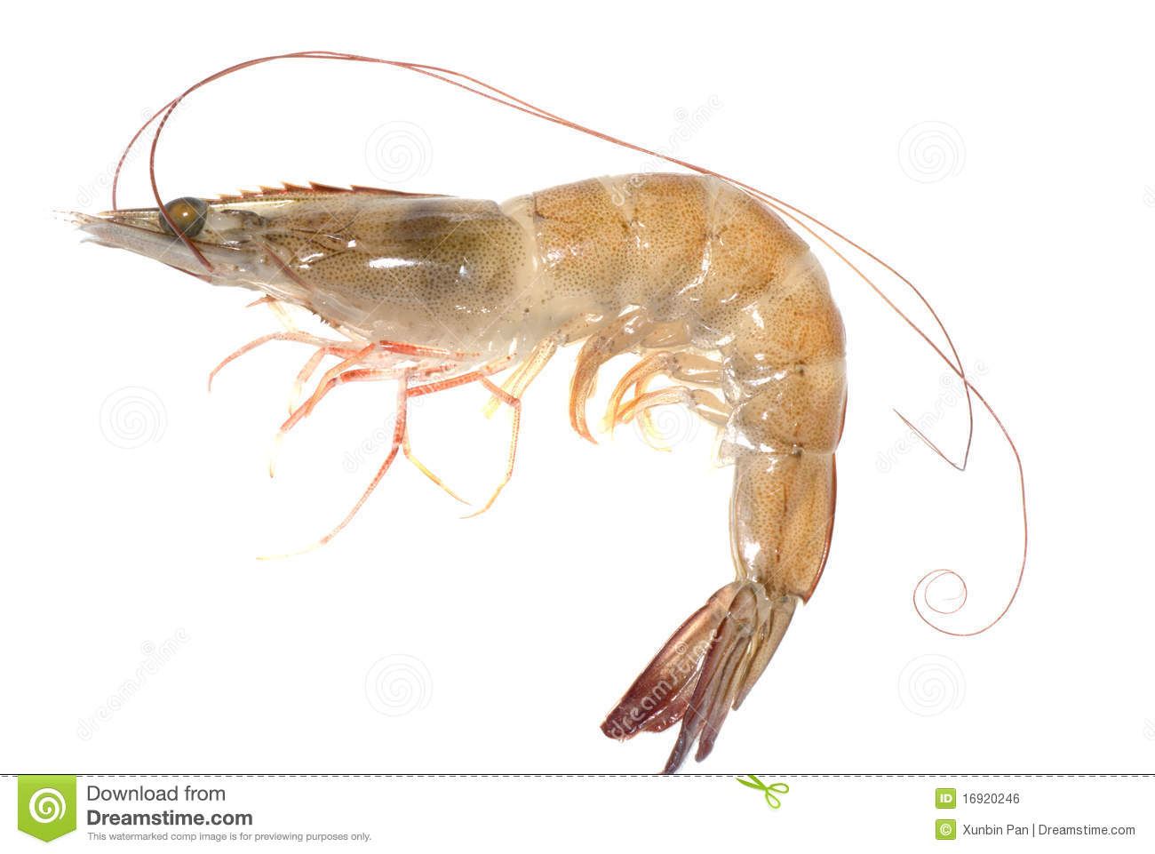 http://thumbs.dreamstime.com/z/fresh-prawn-16920246.jpg