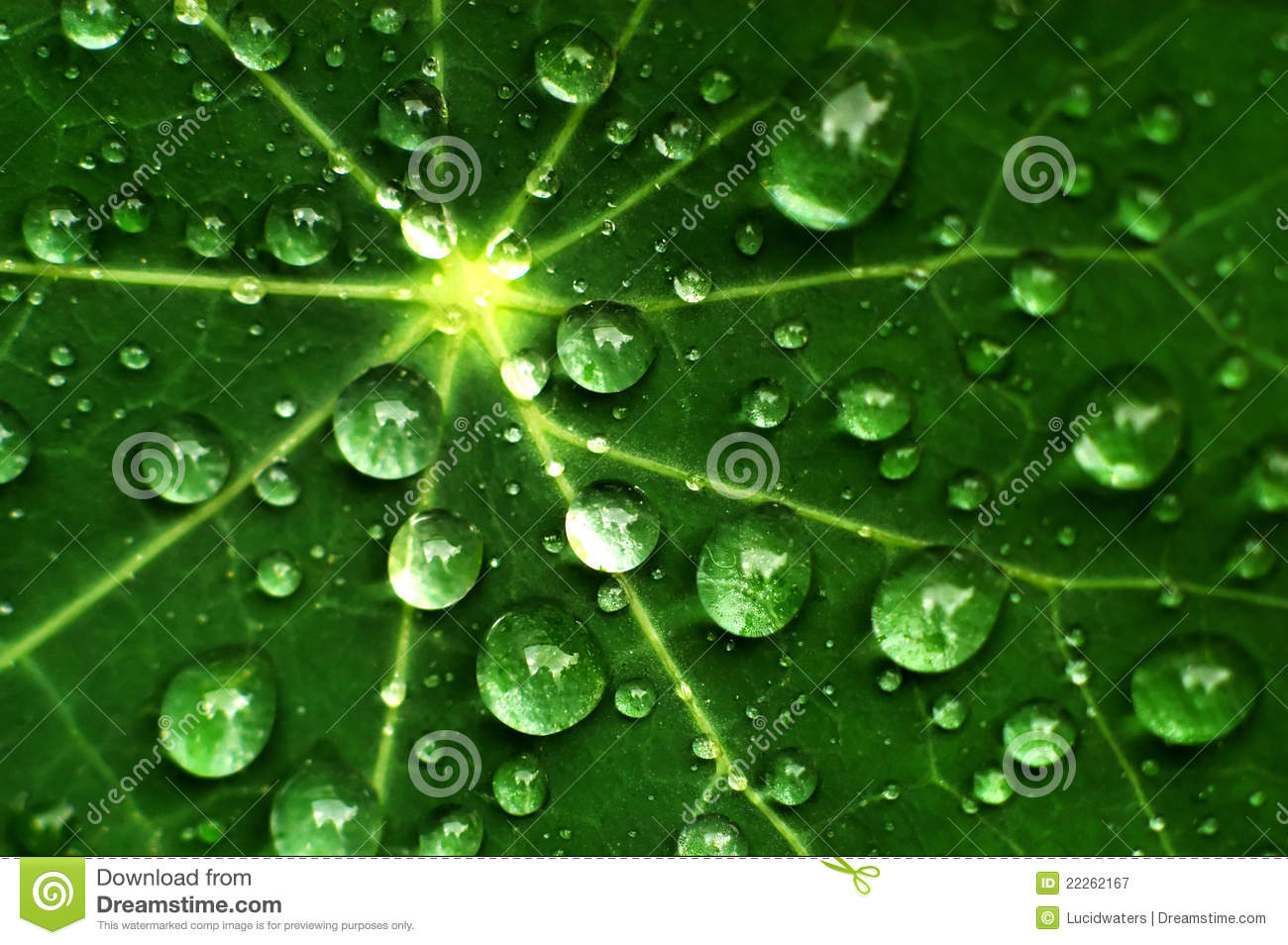 Fresh Raindrops On A Leaf Royalty Free Stock Photography