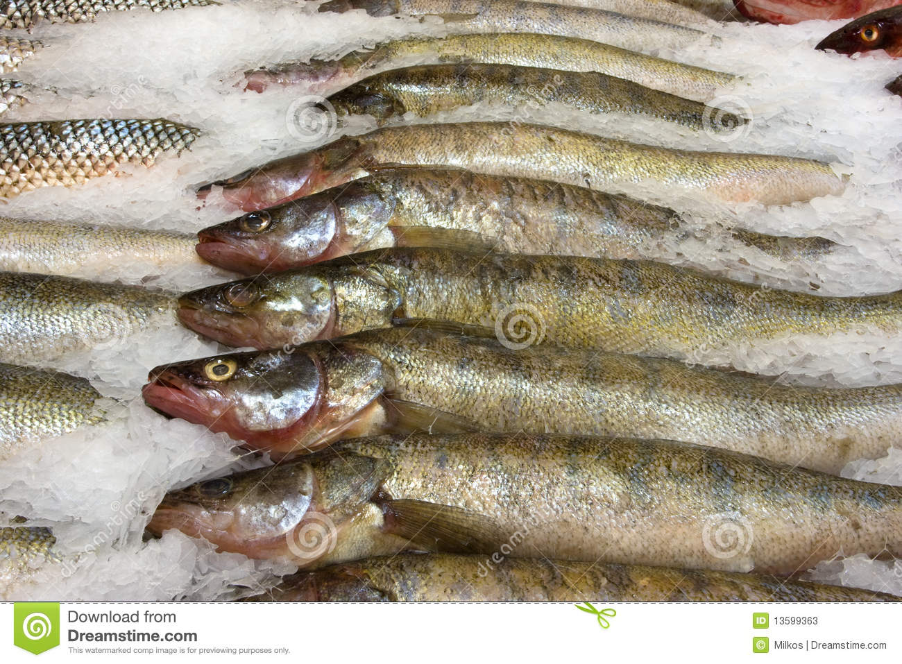 [Image: fresh-raw-fish-supermarket-13599363.jpg]