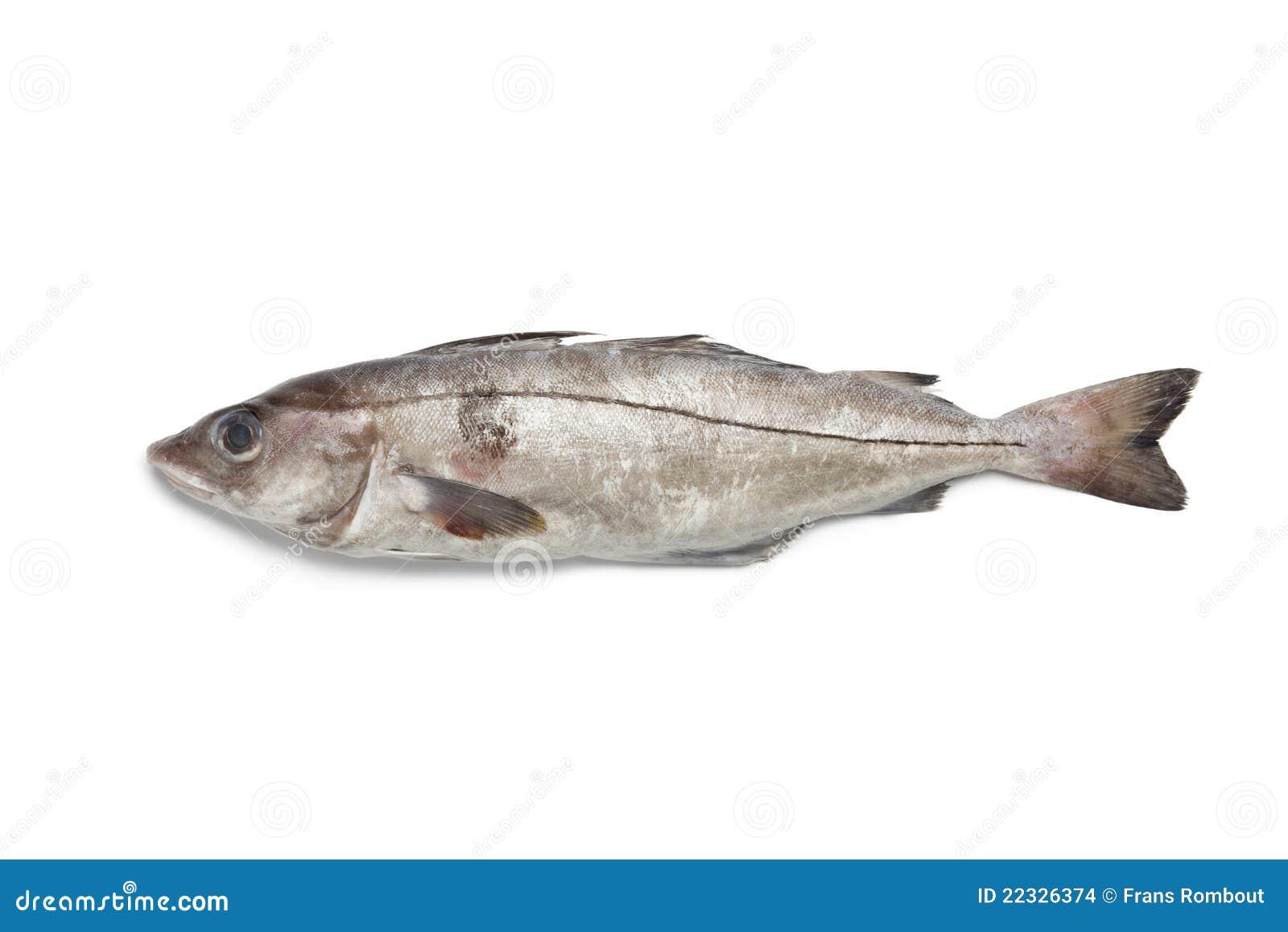 Fresh raw haddock stock photo image of whole horizontal for Healthiest white fish