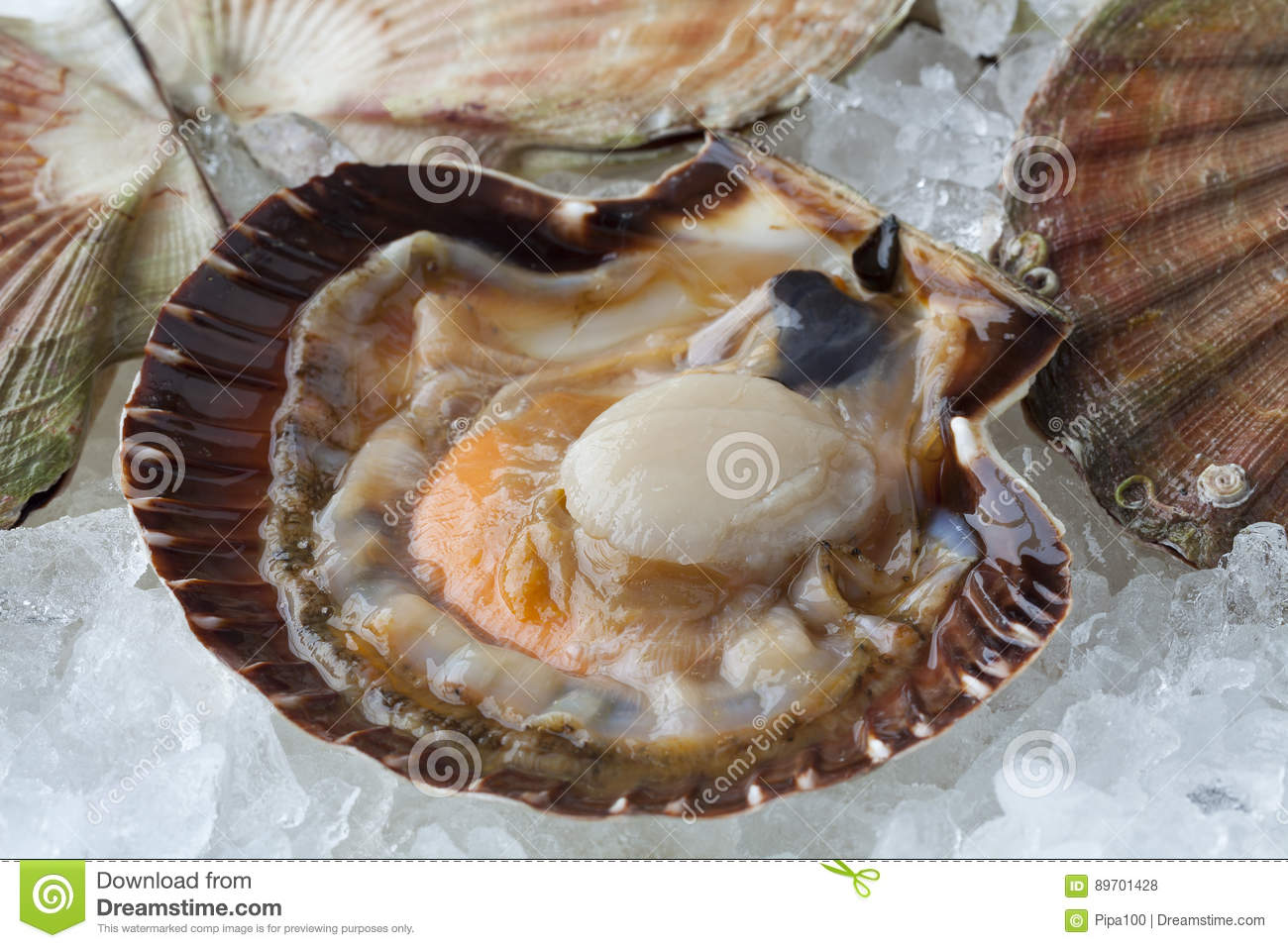 Fresh raw open scallop on ice