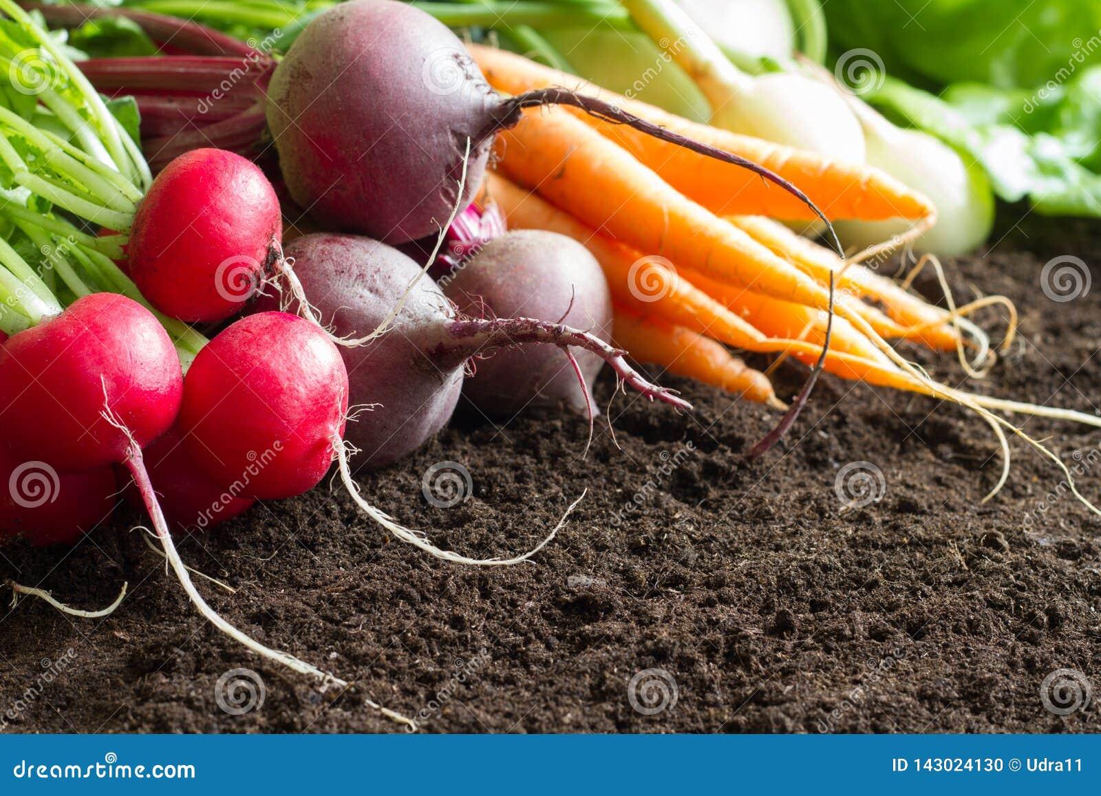 Fresh raw spring vegetables harvest in the garden organic background concept