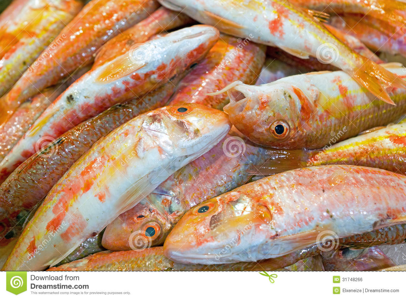 Fresh red mullet fish for sale royalty free stock image for Eating mullet fish