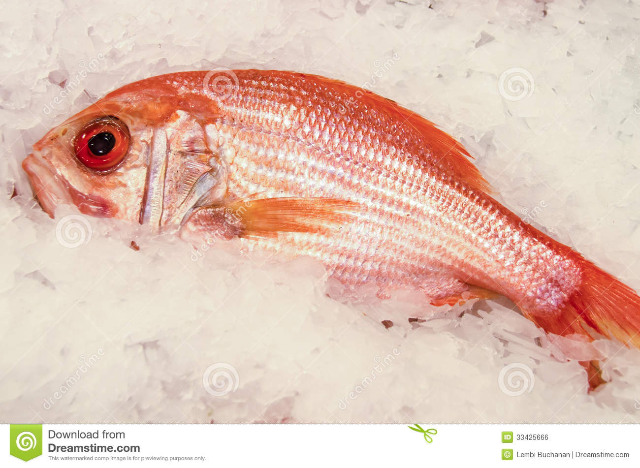 Fresh Red Snapper On Ice Royalty Free Stock Image - Image: 33425666