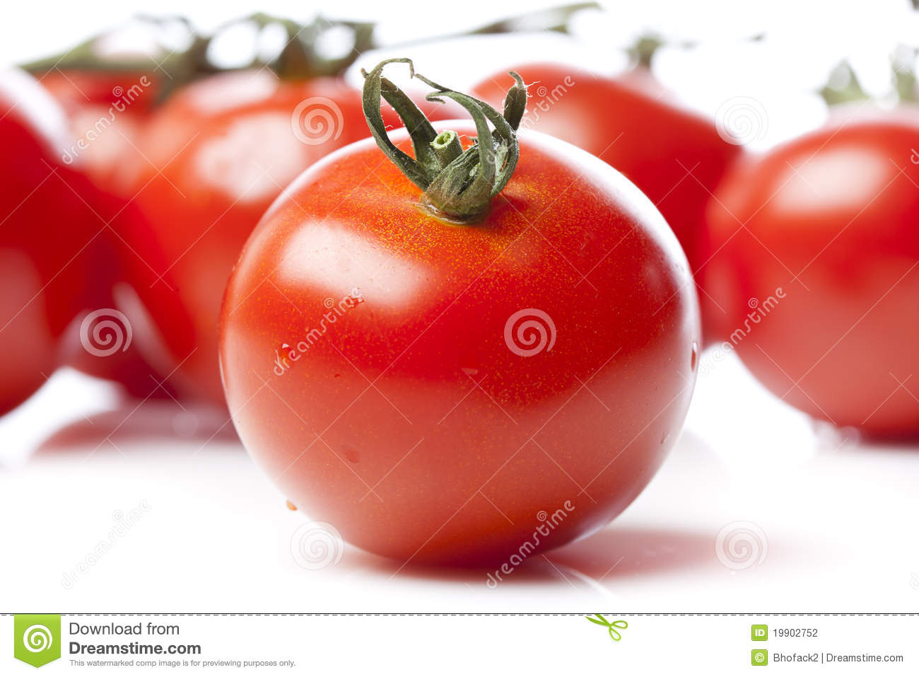 Fresh Red Tomatoes Stock Photography - Image: 19902752
