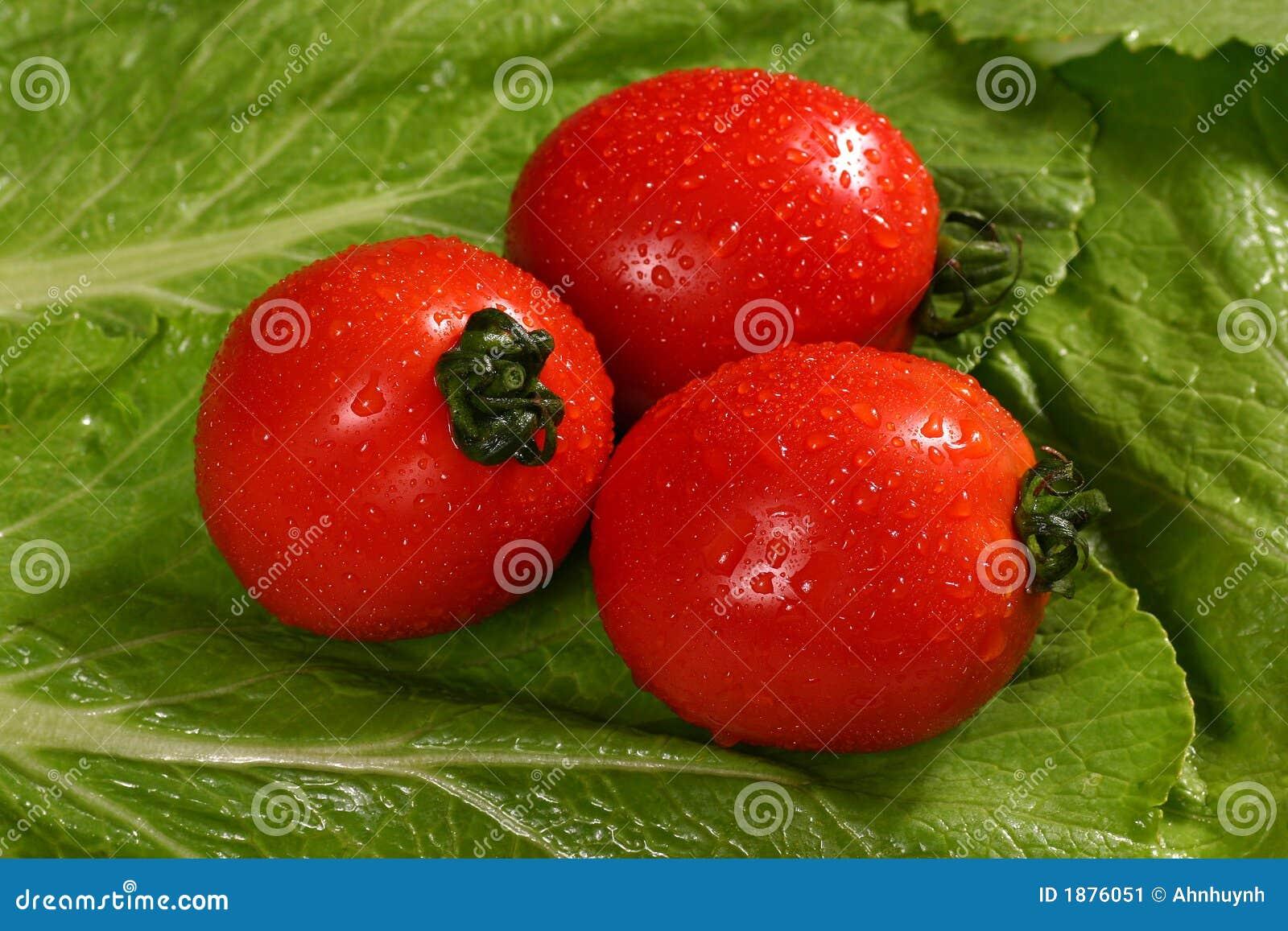 Fresh Red Tomatoes On Lettuce Stock Image - Image: 1876051