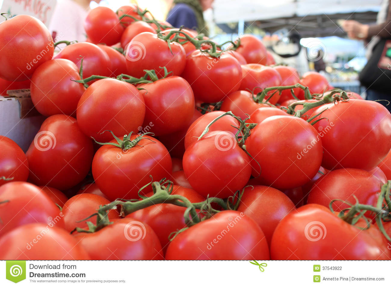 Fresh, Red Vine Ripe Tomatoes Stock Photography - Image ...