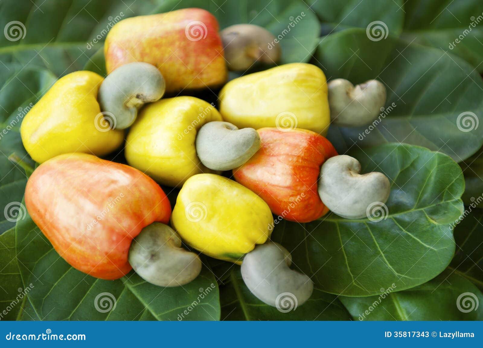 Image Result For Fruit Farm P Ography