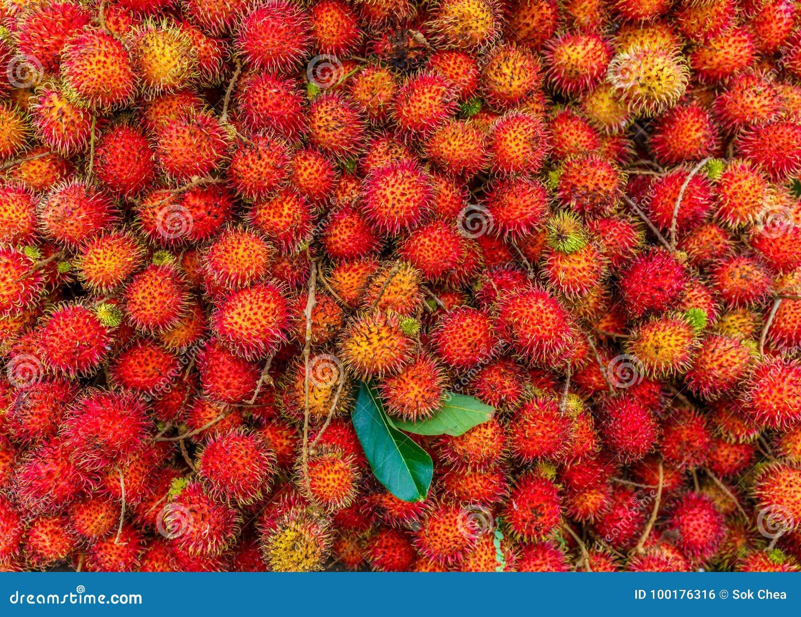 Fresh Ripe Rambutan the Popular Juicy Sweet Tropical Fruit Serving as Healthy Food