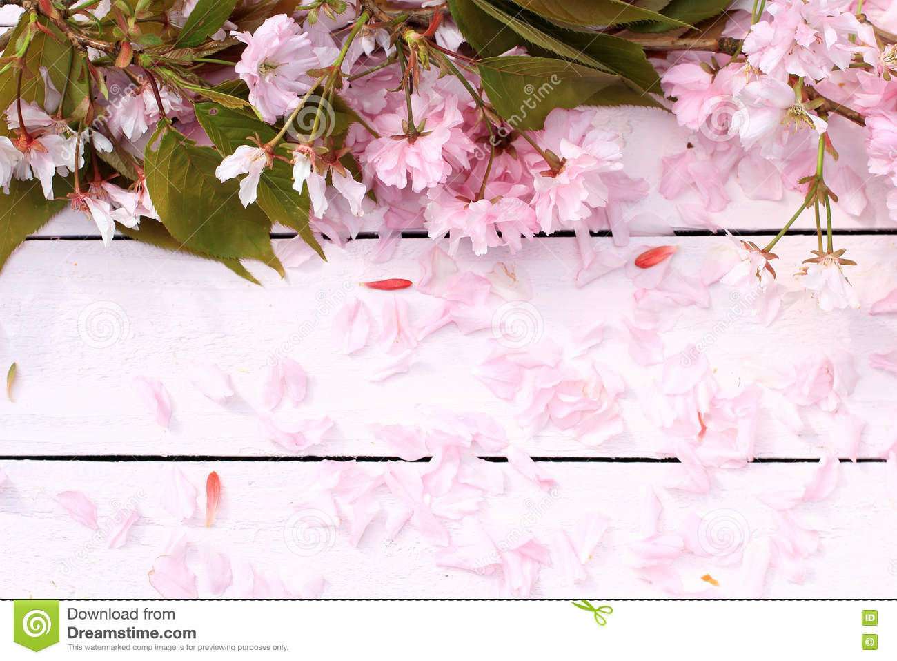 Fresh Romantic Rustic Spring Background With Cherry Flowers Petals