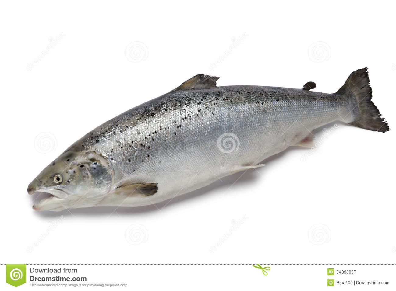 Fresh salmon fish stock image image of freshwater white for Salmon fish pictures