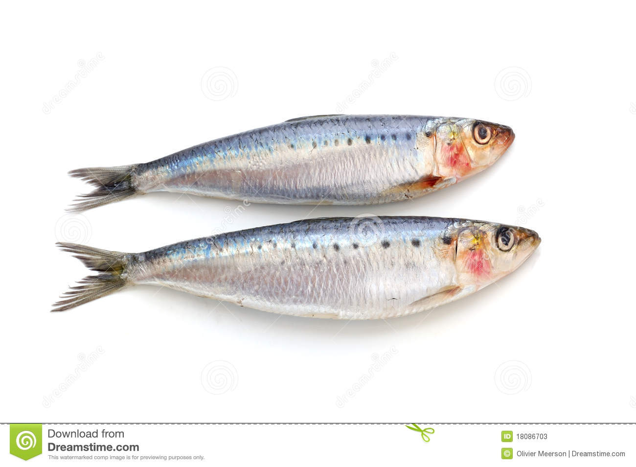 Two fresh sardines on white background, good source of omega three.