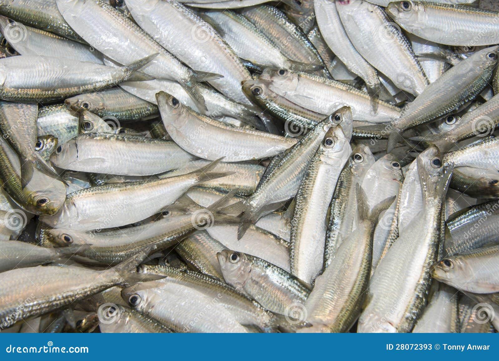 how to cook fresh sardines